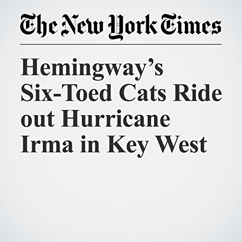 Hemingway's Six-Toed Cats Ride out Hurricane Irma in Key West copertina