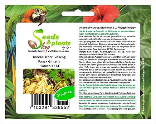 Stk - 6x Koreanischer Ginseng Panax Garten Pflanzen - Samen #314 - Seeds Plants Shop Samenbank Pfullingen Patrik Ipsa