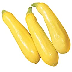"Perfect straight neck summer squash that grows on sturdy, open, yet compact plants Each packet contains 100 seeds Sow outdoors 4 weeks after the average last frost date and harvest in 55 days Plant Height is 24"". plant spread is 36"". yields 7-8"" frui..."