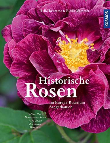 Historische Rosen: im Europa-Rosarium...