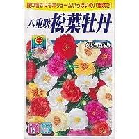 八重咲松葉牡丹 (807)