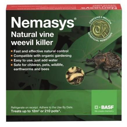 Nemasys vine weevil killer 12sq m - same-day despatch