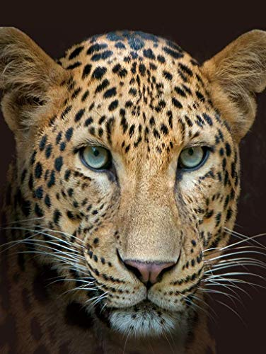 CB Home % Style Tierdecke XL 150 x 200 cm Kuscheldecke Decke (Leopard-farbig)