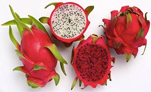 Exotic Tropical Dragon Fruit, Pitaya (Hylocereus Undatus) Organic Fruit Fresh Heirloom Seeds *White & Red*
