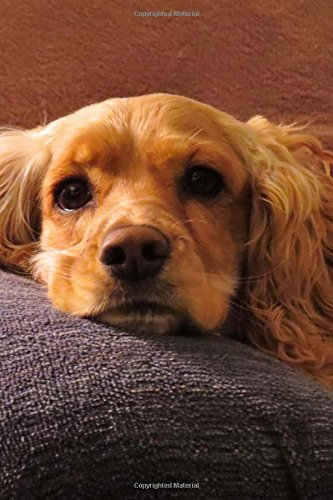Sweet Blonde Cocker Spaniel Dog is Looking at You Pet Journal: 150 Page Lined Notebook/Diary