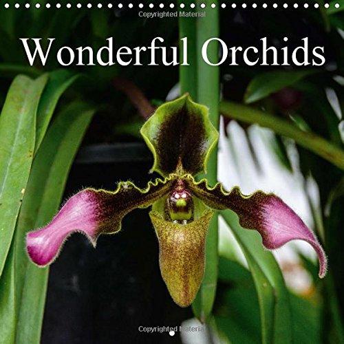 Wonderful Orchids (Wall Calendar 2017 300 × 300 mm Square) (Calvendo Nature)