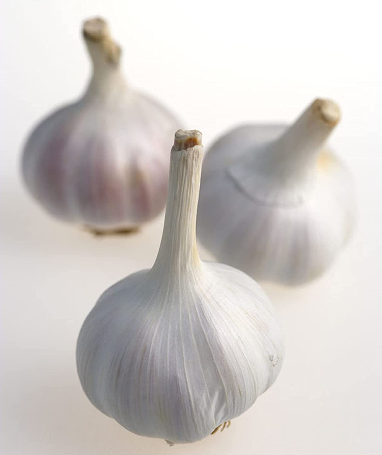 Fixed price for sale Garlic Bulb Healthy Brand Cheap Sale Venue Bulbs germinat to Easy Organic