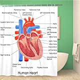 Awowee Bathroom Shower Curtain Anatomical of Diagram Human Heart Anatomy Body Muscle Organ Polyester Fabric 72x72 inches Waterproof Bath Curtain Set with Hooks