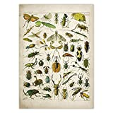 LIFUSHA Schmetterling Vintage Poster Biene Insekt Vogel
