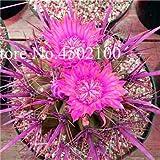 bloom green co. saldi! 120 pz africano fiore di cactus misto succulente bonsai seedssplant tree climbing purificare l'aria bonsai nel termoresistente: 5