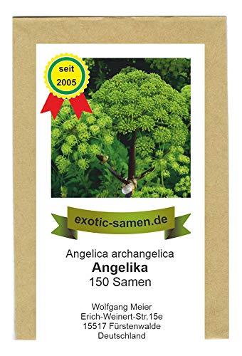 Arznei-Engelwurz – Echter Engelwurz – Angelica archangelica – Gewürz- und Arzneipflanze – 150 Samen