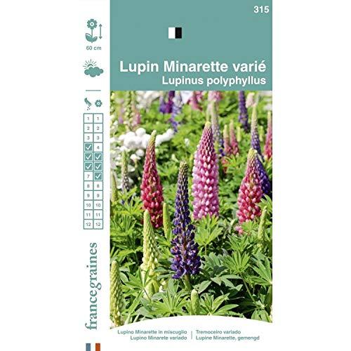 France Graines Lupin Minarette Varié