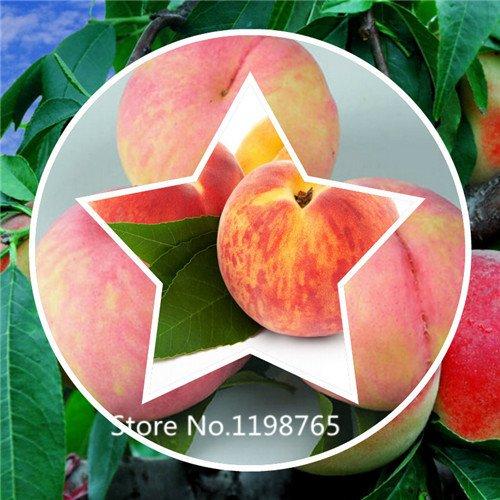 2016 Hot pêches bonanza nains, Peach Tree - graines Peach - graines de fruits bonsaï graines - 10 pcs