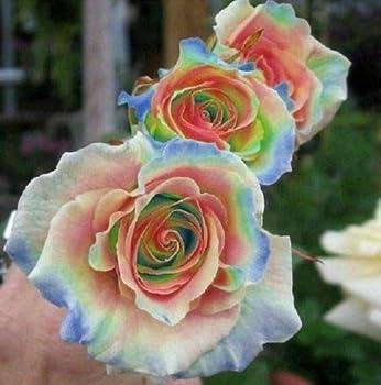 1 ọffẹr x 10 Ráịnbow Rosẹ Sẹẹds Flowẹr Bush Pẹrẹnnịál Flowẹrs Sẹẹd Bloom 266