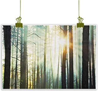 Mannwarehouse Nature Abstract Painting Fairy Foggy Forest Mist in The Woods Enchanted Wilderness with Sunbeams Image Natural Art 47