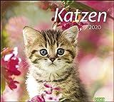 times&more Katzen Bildkalender. Wandkalender 2020. Monatskalendarium. Spiralbindung. Format 30 x 27 cm