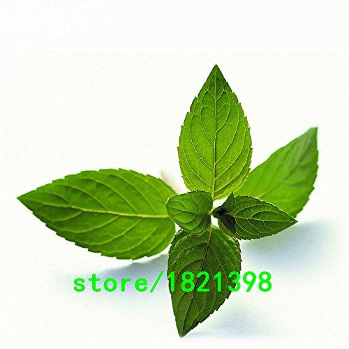 SVI Organiques De L'héritage de l'oignon vert, graines de légume Paquet professionnel chinois, 100 graines/paquet, stérilisation fonction # nf952