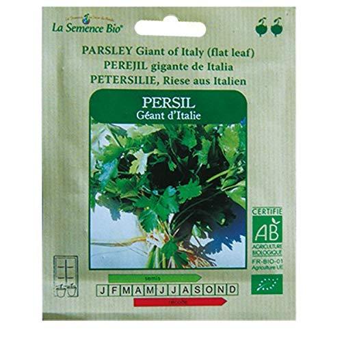 Graines Bio - Persil Géant D'Italie - semence biologique