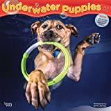 Underwater Puppies 2021 12 x 12 Inch Monthly Square Wall Calendar, Pet Humor Puppy