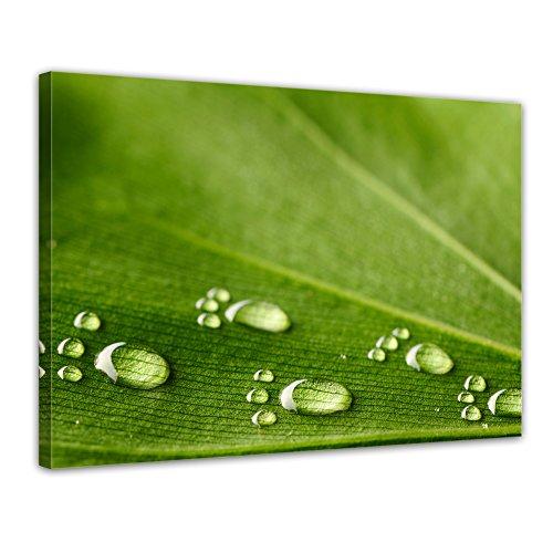 Bilderdepot24 Bild auf Leinwand   Wasserspuren auf einem Blatt in 60x50 cm als Wandbild   Wand-deko Dekoration Wohnung modern Bilder   200657