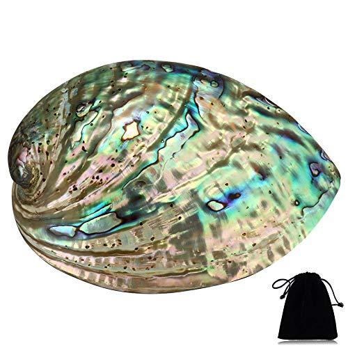 YYW Grand bol en coquillage d'ormeau naturel vert, multi-trous, décoration de fête, mariage, décoration d'intérieur