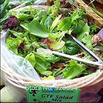 VISTARIC 6: 100 Pcs Clematis Graines de plantes Belle Paillage Graines de fleurs Bonsai ou un pot de fleurs vivaces pour jardin Mix 6 Couleurs
