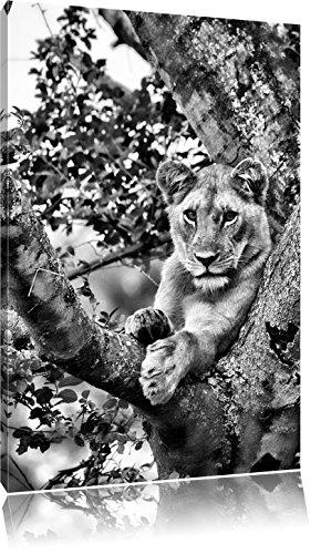 Pixxprint schöne Löwin auf Baum als Leinwandbild | Größe: 100x70 | Wandbild| Kunstdruck | fertig bespannt