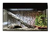 Lucky Reptile sk80s B Starter Kit Serpente, 80cm, Nero