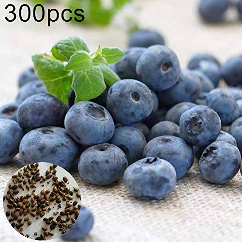 BYyushop Blueberry Tree Seeds 300Pcs Sweet Blueberry Tree Seeds Delicious Fruit Pot Bonsai Home Garden Plant - Blueberry Seeds