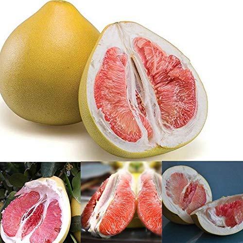 Buffyin 20Pcs Packung Thai Grün Pomelo Samen Grapefruit Baum Samen Sweet Frucht- Pflanzen Samen