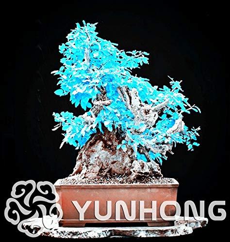 Bloom Green Co. 10PCS / bag Koreanische Hainbuche Bonsai Mini Bonsai-Baum Bonsai fr Hausgarten sehr schn sprießen 95{96fc13269b94d8ec194fadbad1d84119b286afb077b30ce8c1e69734004440d4}: 6