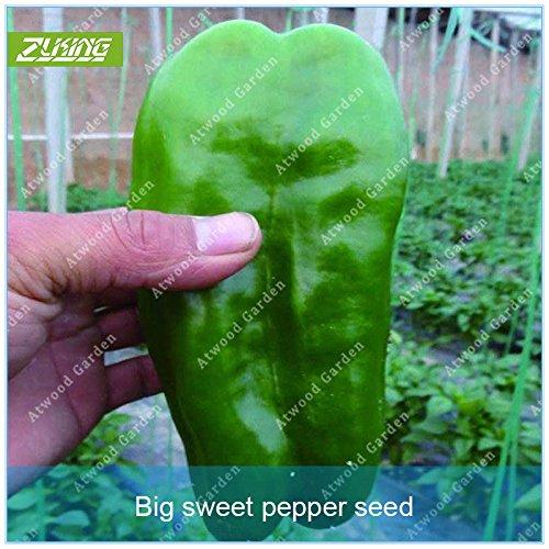 ZLKING Pepper géant légumes Graines De vivaces Bonsai Garden Chinese Food Easy Grow non Ogm plantes de légumes bio
