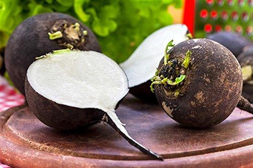 Graines Radis Noir Skvirska Chorna culture biologique légumes Heirloom russe