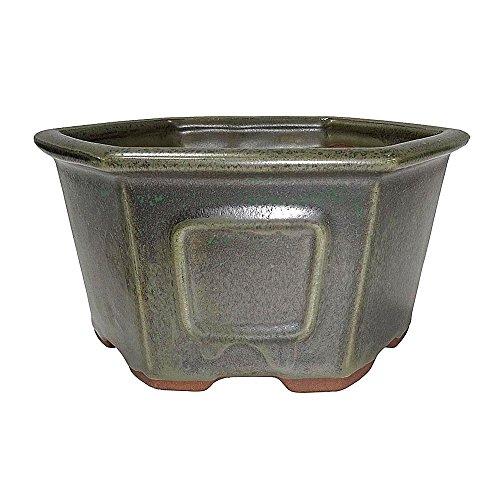 Brussel's 7' Hex Bonsai Glazed Ceramic Pot (Medium, Sesame Green)