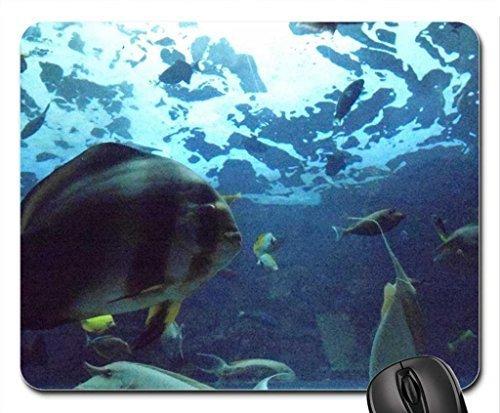 Ein palmer aquarium mouse pad