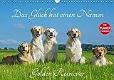 Das Glück hat einen Namen - Golden Retriever (Wandkalender 2020 DIN A3 quer)