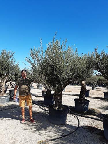 promo grand olivier -15 à -18°C