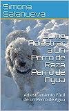 Cómo Adiestrar a Un Perro de Raza Perro de Agua : Adiestramiento Fácil de un Perro de Agua