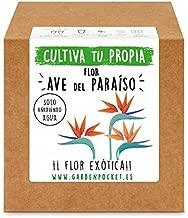 Amazon.es: kit cultivo
