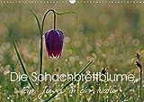 Die Schachbrettblume (Wandkalender 2021 DIN A3 quer)