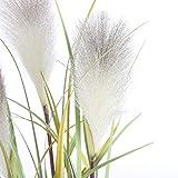 MICA Decorations Federgras Foxtail Kunstpflanze, PVC, weiß, h 81 d 45 cm, 6-Einheiten - 2