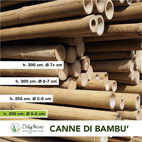 Canna di bambù Moso Alta 200 cm, Diametro 5-6 cm, Pezzo Singolo, Canna 100% Italiana, Non trattata, Resistente e Naturale – per Arredamento e Design