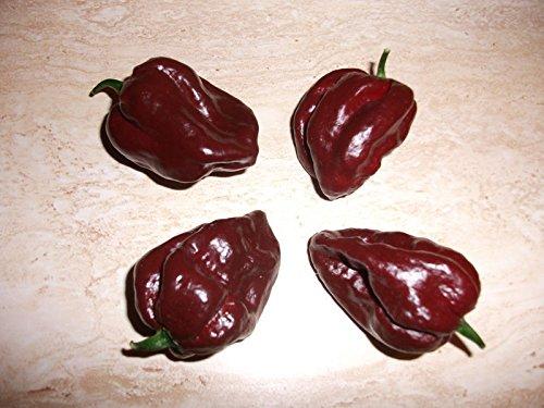 Portal Cool 25 Trinidad 7 Pot Douglah Samen, einer der heißesten Paprika der Welt - C 014