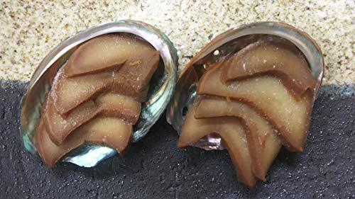 新 あわび 風 煮貝 10入 業務用 冷凍 殻付き 味付け