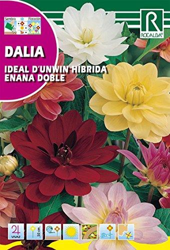 Rocalba s-620261Semilla Dalia Ideal Unwin-10Pezzi