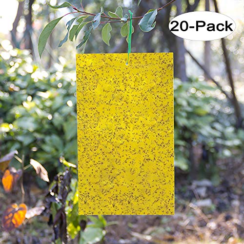 Kensizer 20Pack DualSided Yellow Sticky Gnat Traps for Indoor/Outdoor Flying Plant Insect Like Fungus Gnats Whiteflies Aphids Leaf Miners Thrips Other Flying Plant Insects  6x8 Inches
