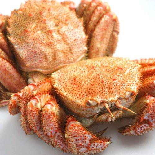 活彩 北海道 訳あり 稚内産 毛ガニ 2Kg 詰合せ セット 毛蟹 毛がに 足折れ有 蟹の剥き方 パンフレット付