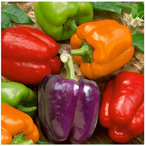 David's Garden Seeds Pepper Bell Rainbow Blend 1323 (Multi) 50 Non-GMO, Heirloom Seeds