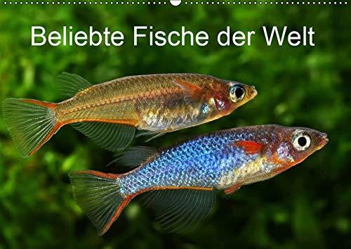 Beliebte Fische der Welt (Wandkalender 2019 DIN A2 quer): Farbenprächtige Süßwasserfische (Monatskalender, 14 Seiten ) (CALVENDO Tiere)