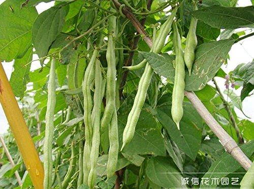 Hot graines vente de légumes, haricots verts 70pcs graines, Bonsai graines, fruits et légumes plantation, Haut débit en herbe ,.